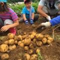 ≪八ヶ岳≫ 野菜作り体験!じゃがいもを植えよう